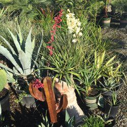 wyntour gardens 32 photos 14 reviews nurseries gardening 8026 airport rd redding ca