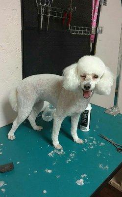 Diggidy dog pet salon 200 n main st keller tx pet grooming mapquest solutioingenieria Image collections