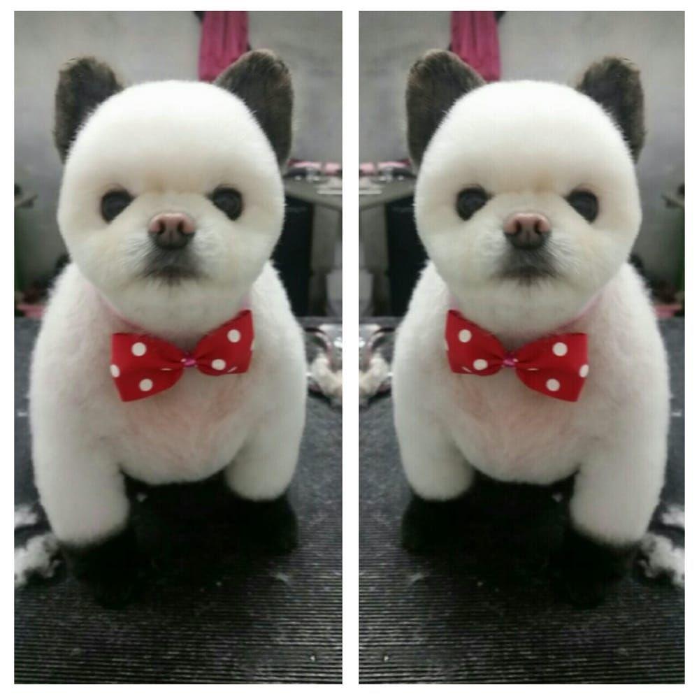 NY Puppy Club - 253 Photos & 220 Reviews - Pet Groomers