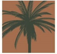palm garden of pinellas skilled nursing 200 16th ave se largo fl phone number yelp