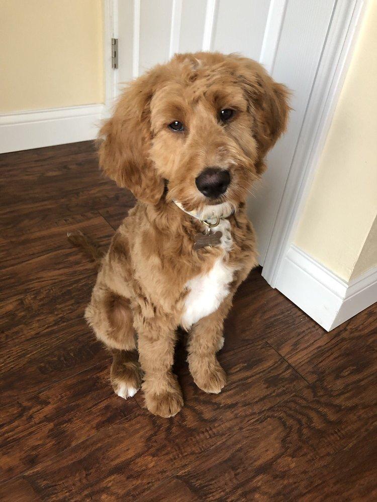 Clover Pup Salon: 2908 Taylor Ave, Racine, WI