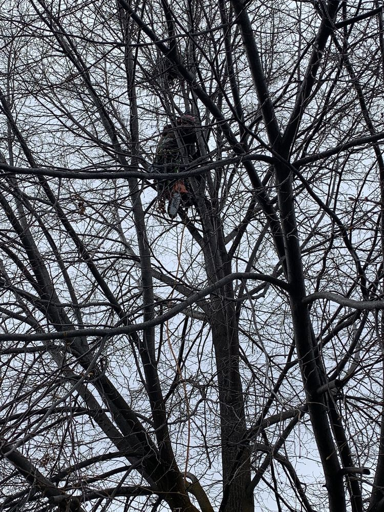 North Fork Tree Service: Boise, ID