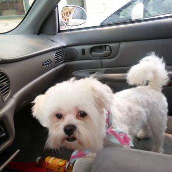 Dog Grooming Jacksonville Fl Beach Blvd