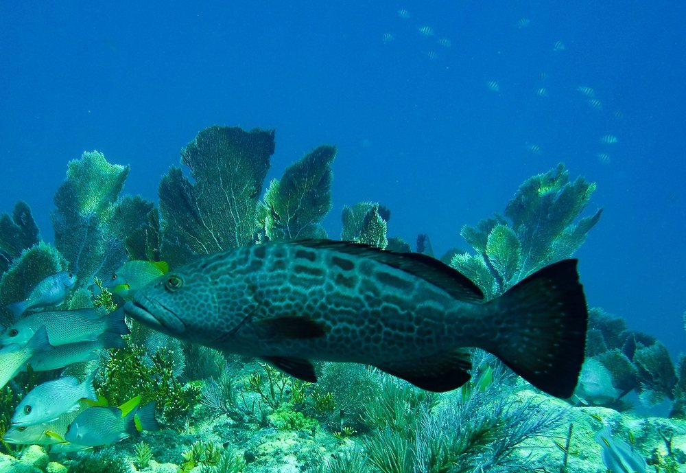 Gaspar's Dive N Board: 2961 Placida Rd, Englewood, FL