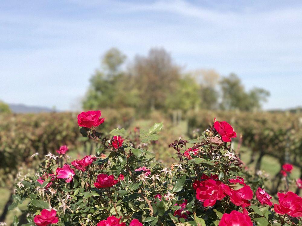 North Mountain Vineyard & Winery: 4374 Swartz Rd, Maurertown, VA