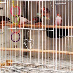 Petland Discounts - CLOSED - 53 Photos & 22 Reviews - Pet