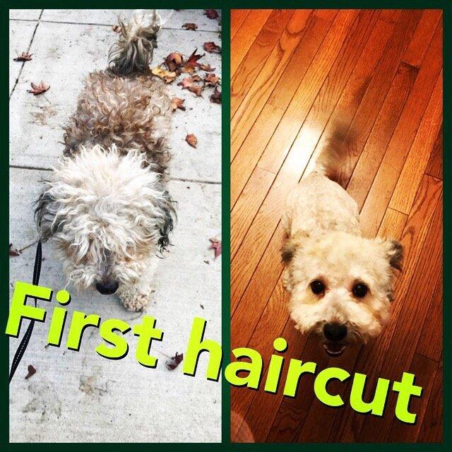 Dog Grooming Pico Blvd
