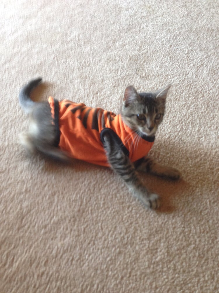 Happy Hearts Pet Care: 5935 W Ellsworth Rd, Ann Arbor, MI