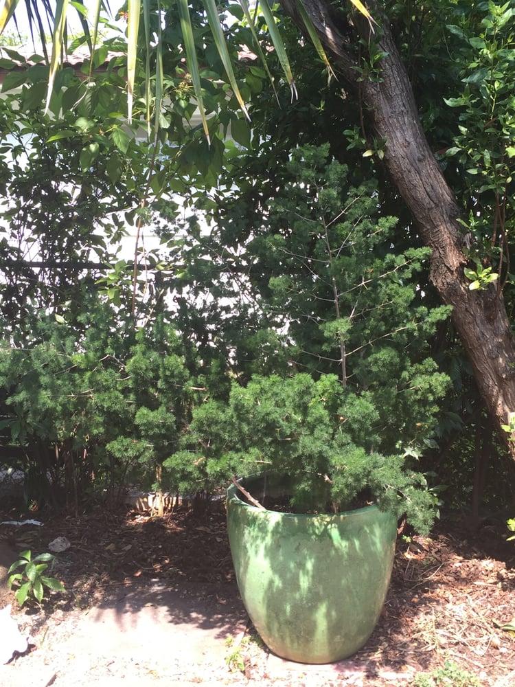 Ming fern asparagus retrofractus yelp for Pond companies near me