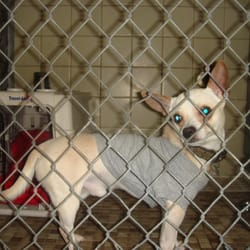 Universal studios kennel closed pet sitting los for Dog boarding los angeles