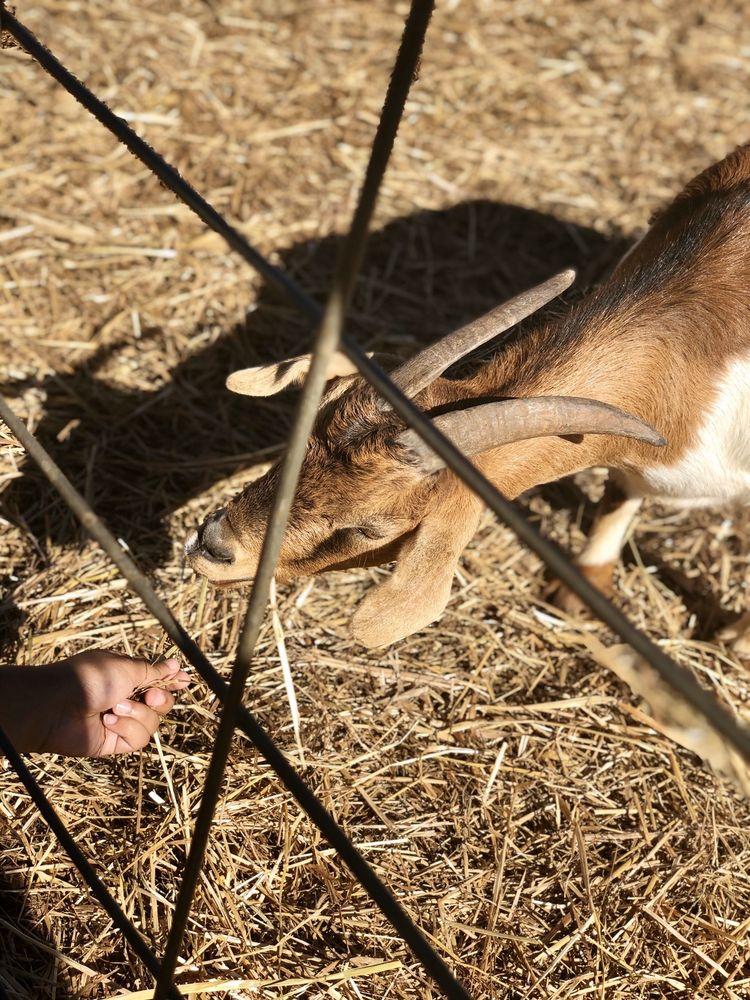 Denver Downs Farm: 4915 Clemson Blvd, Anderson, SC