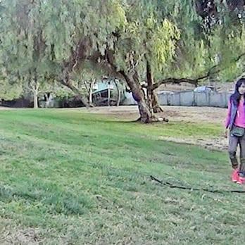 Dog Training Playa Del Rey Ca