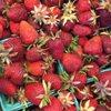 Sidhu Farms Fruit Stand: 14734-14926 96th St E, Puyallup, WA