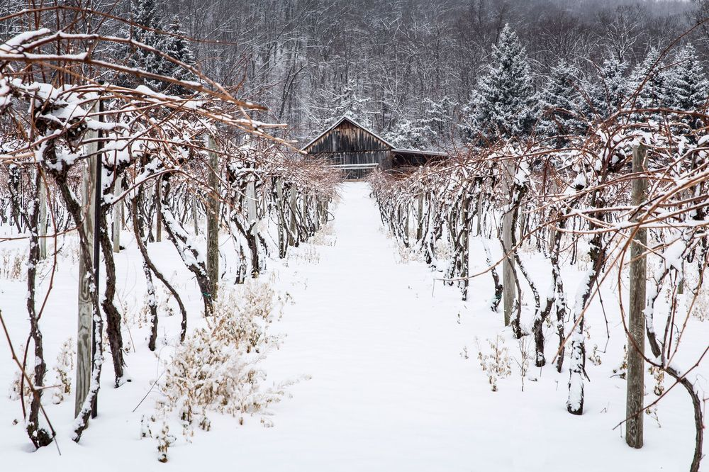 Mount Nittany Vineyard & Winery: 300 Houser Rd, Centre Hall, PA