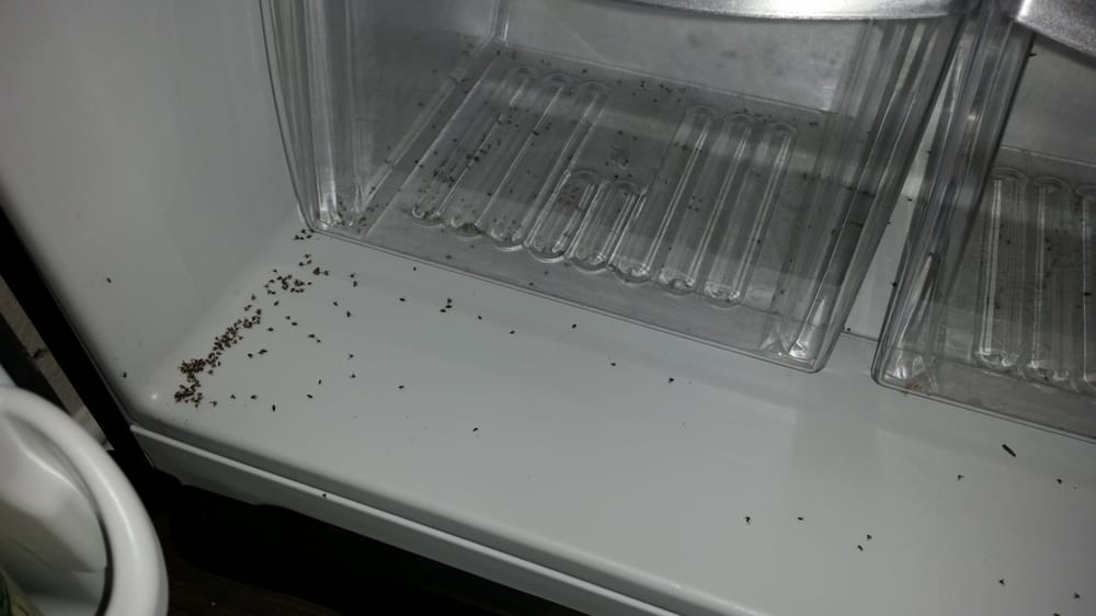 Tiny Bugs Dead And Gathered In Clumps In My Fridge House Safe Houston Texas Tx City Data Forum
