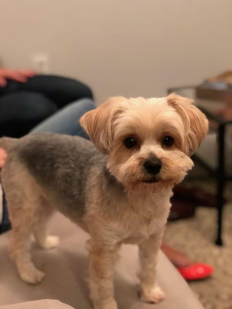 Cozy Cuts Pet Grooming