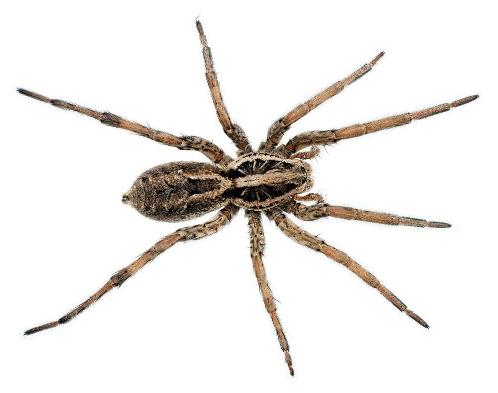 Craig's Pest Service: Clearfield, UT