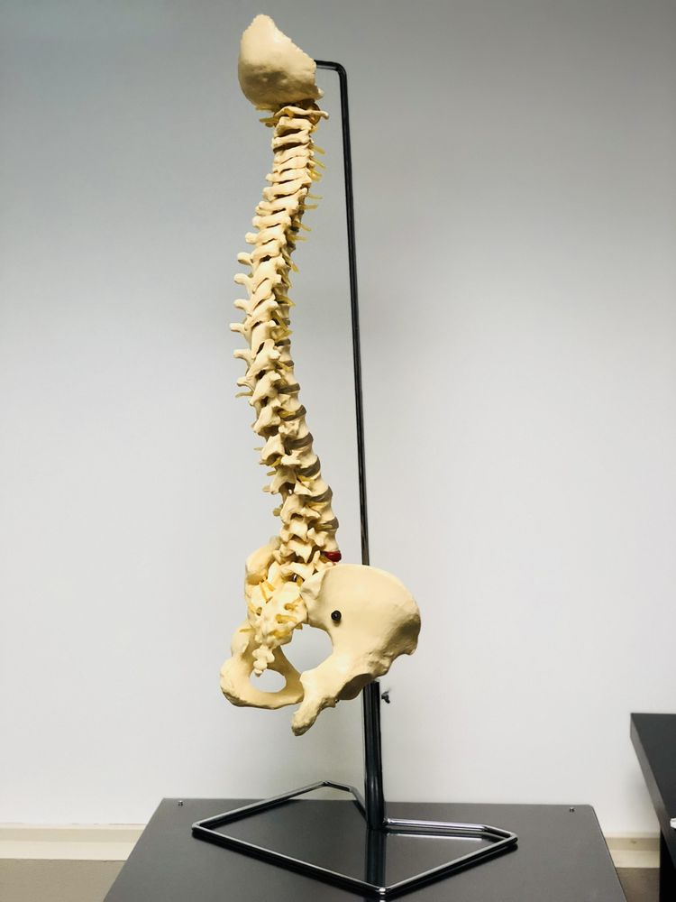 Elevation Chiropractic and Rehabilitation: 9900 SW Greenburg Rd, Tigard, OR