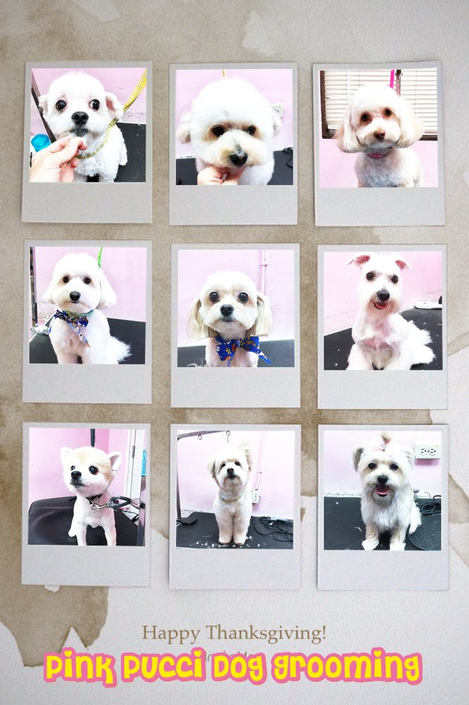 Pink Pucci Dog Grooming Training Day Care 165 Photos 99