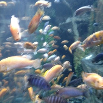 Mystic Aquarium 618 Photos 321 Reviews Aquariums