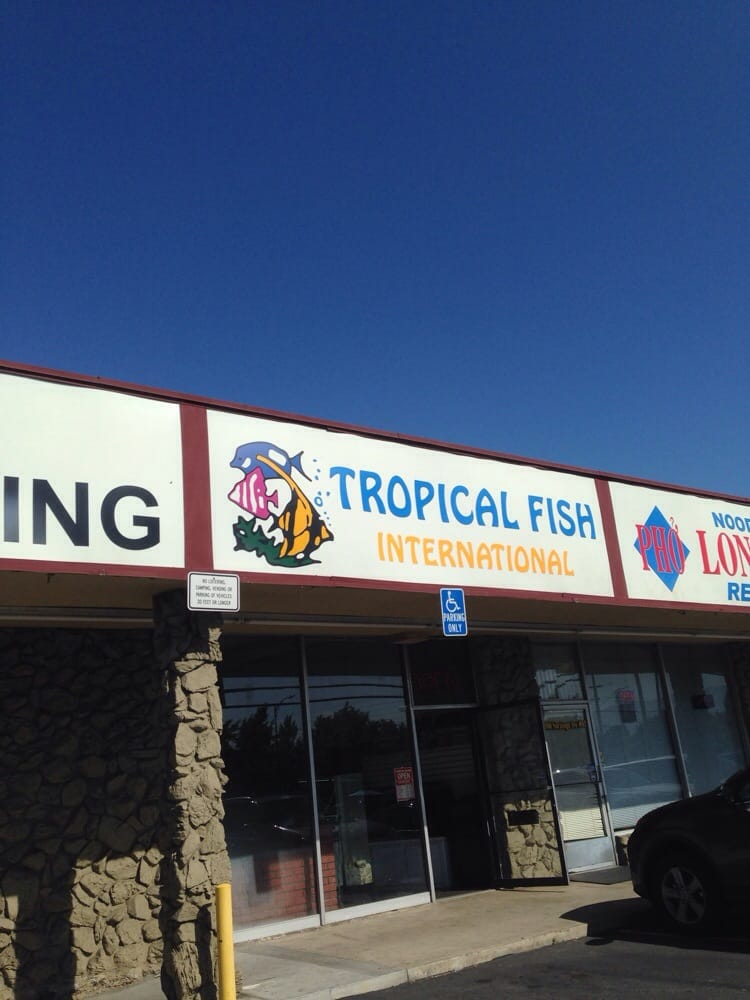 Tropical fish international 40 reviews local fish for Fish store san francisco
