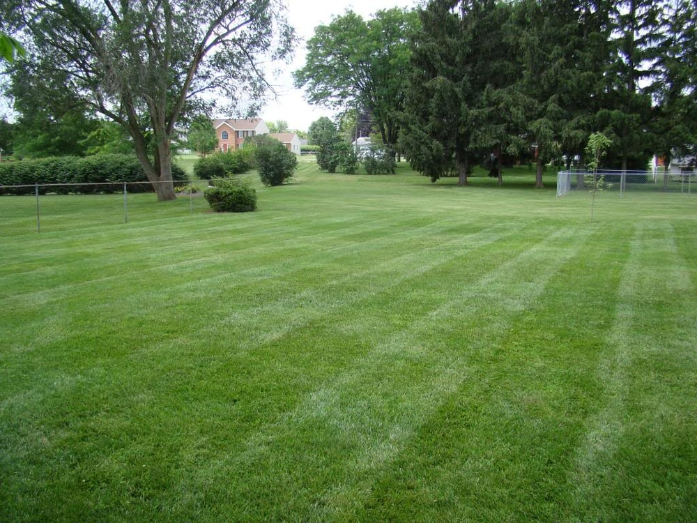 Real Green Pest Control And Lawn Care 29 Photos