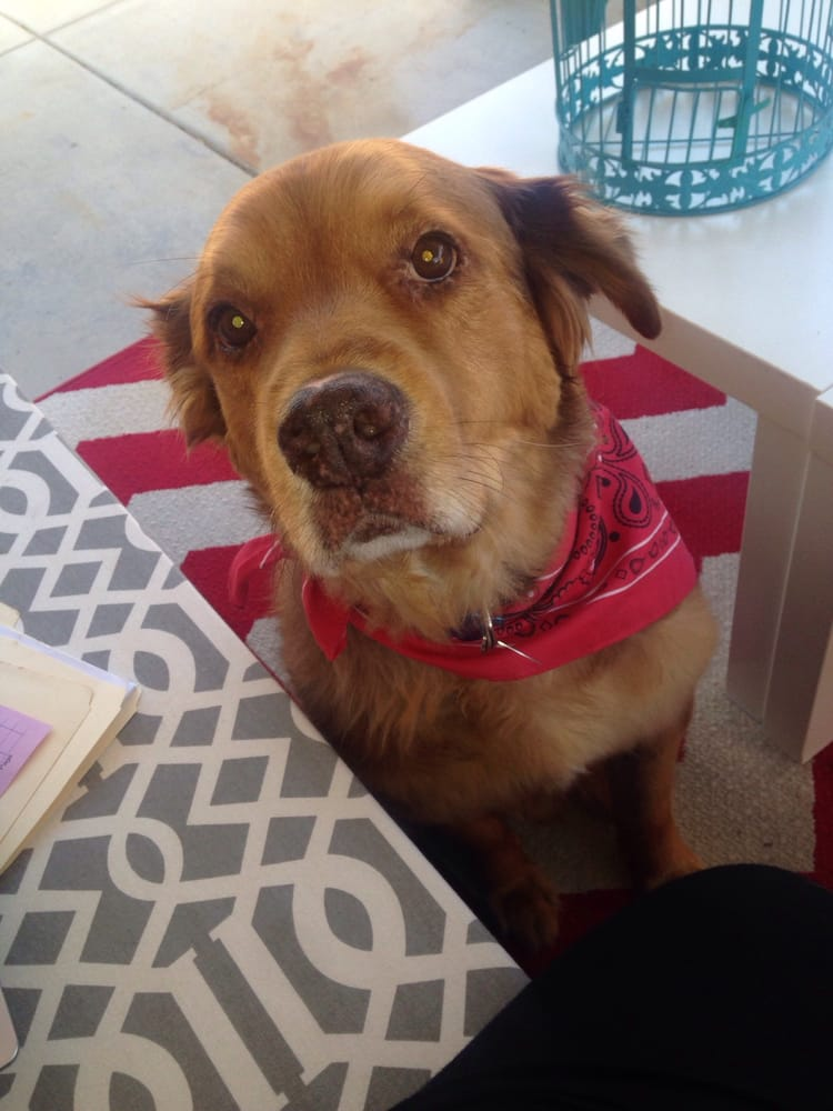 Mary S Roberts Dog Adoption