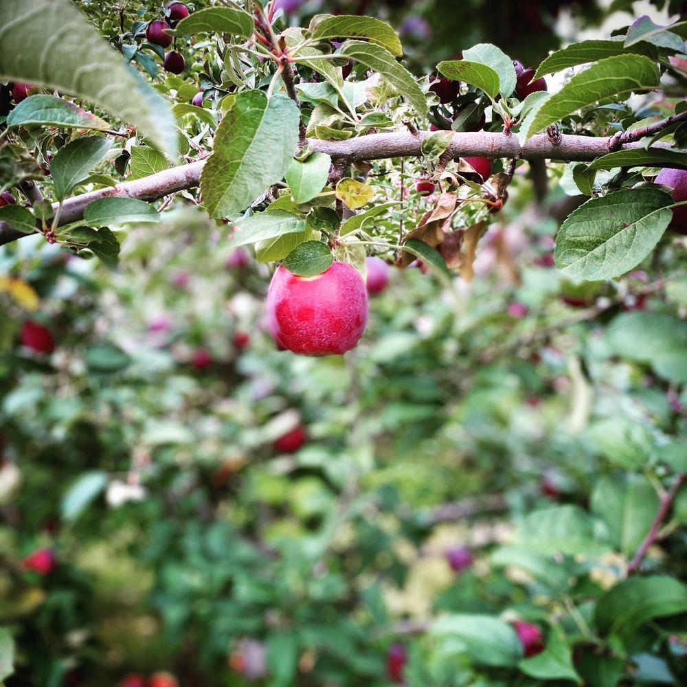 Narrow Lane Orchards