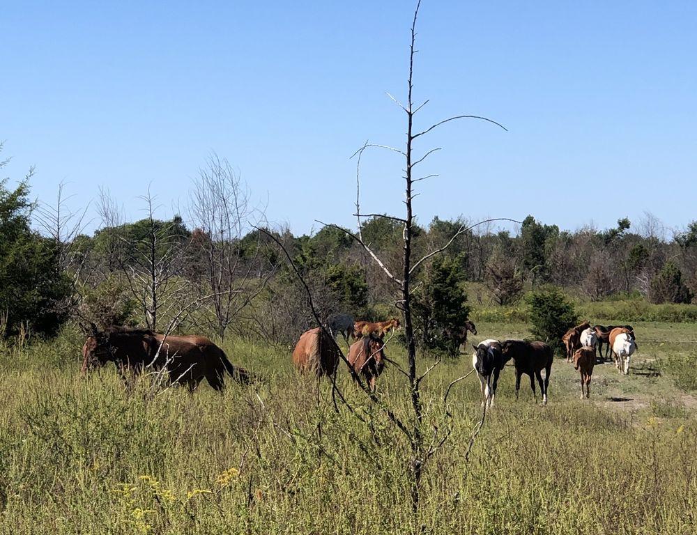 Appalachian Horse Project Tours: Hindman, KY