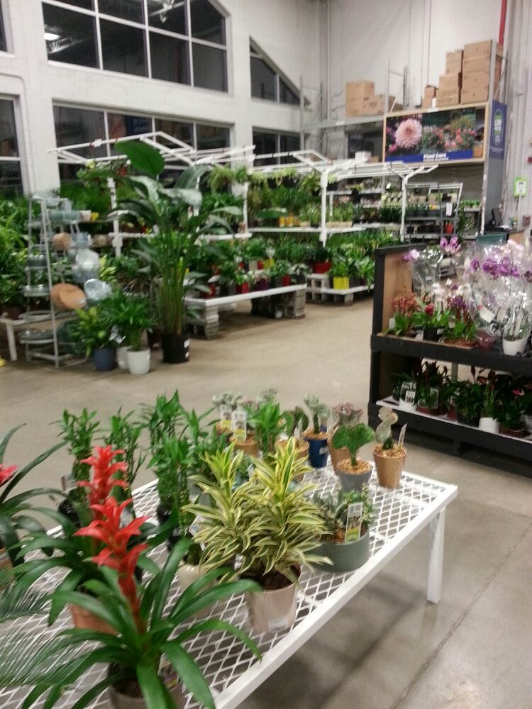Indoor Plant Selection Yelp