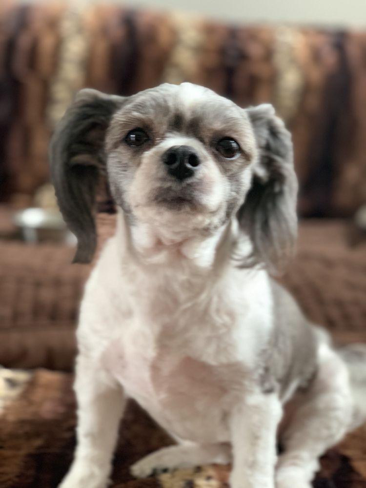 Osana's Pet Salon: 9819 Goodman Rd, Olive Branch, MS