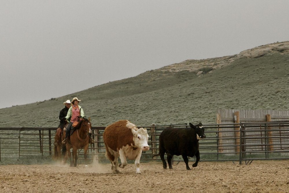 Colorado Cattle Company: 70008 County Rd 132, New Raymer, CO