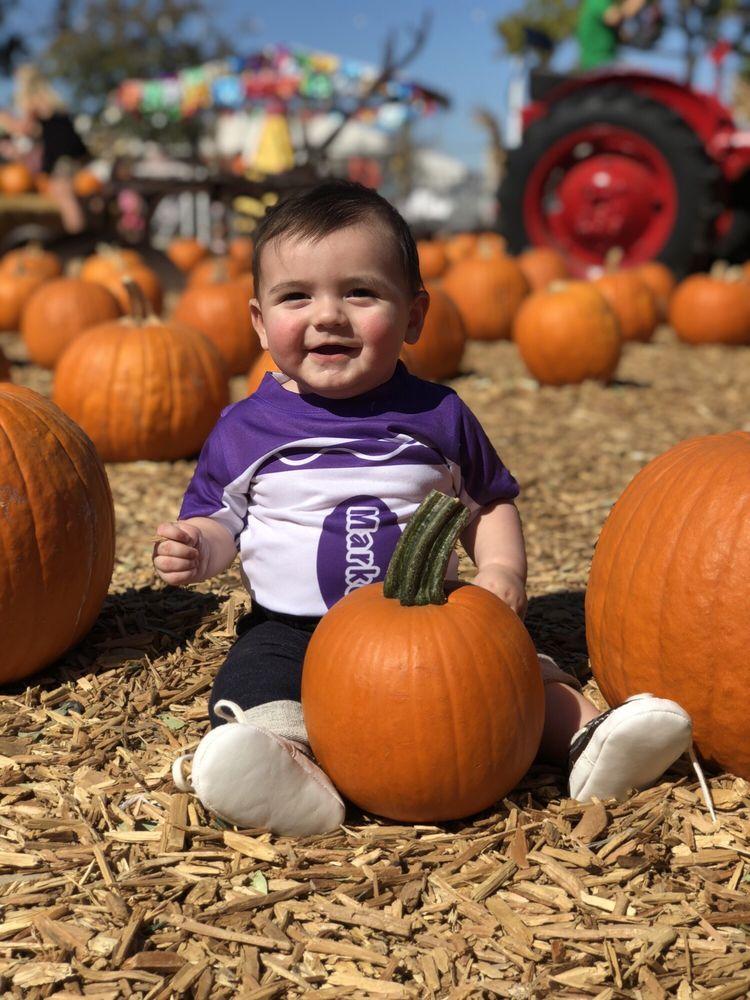 Pumpkin City's Pumpkin Farm: 24203 Avenida De La Carlota, Laguna Hills, CA