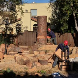 Photo of JC Tree Care u0026 Landscape - Redwood City CA United States & JC Tree Care u0026 Landscape - 51 Photos u0026 103 Reviews - Tree Services ...