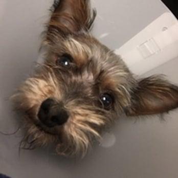 affordable dog vet