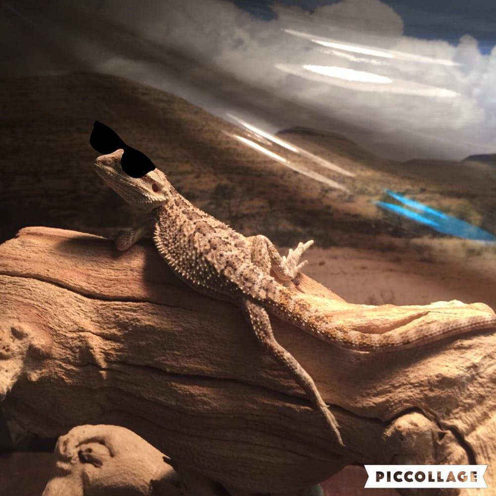 Reptile Island
