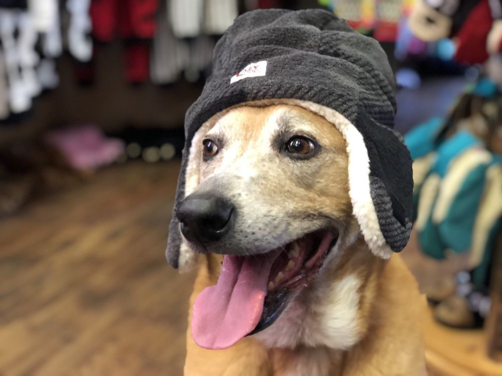 Tons of dog friendly stores nearby! - Yelp