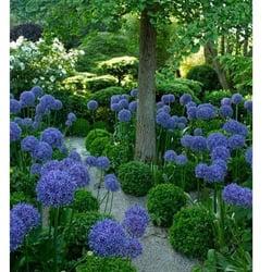 foto de alnus paisajismo y jardinera madrid espaa agapanthus - Jardineria Y Paisajismo