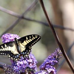 Photo Of Cottage Gardens Of Petaluma   Petaluma, CA, United States