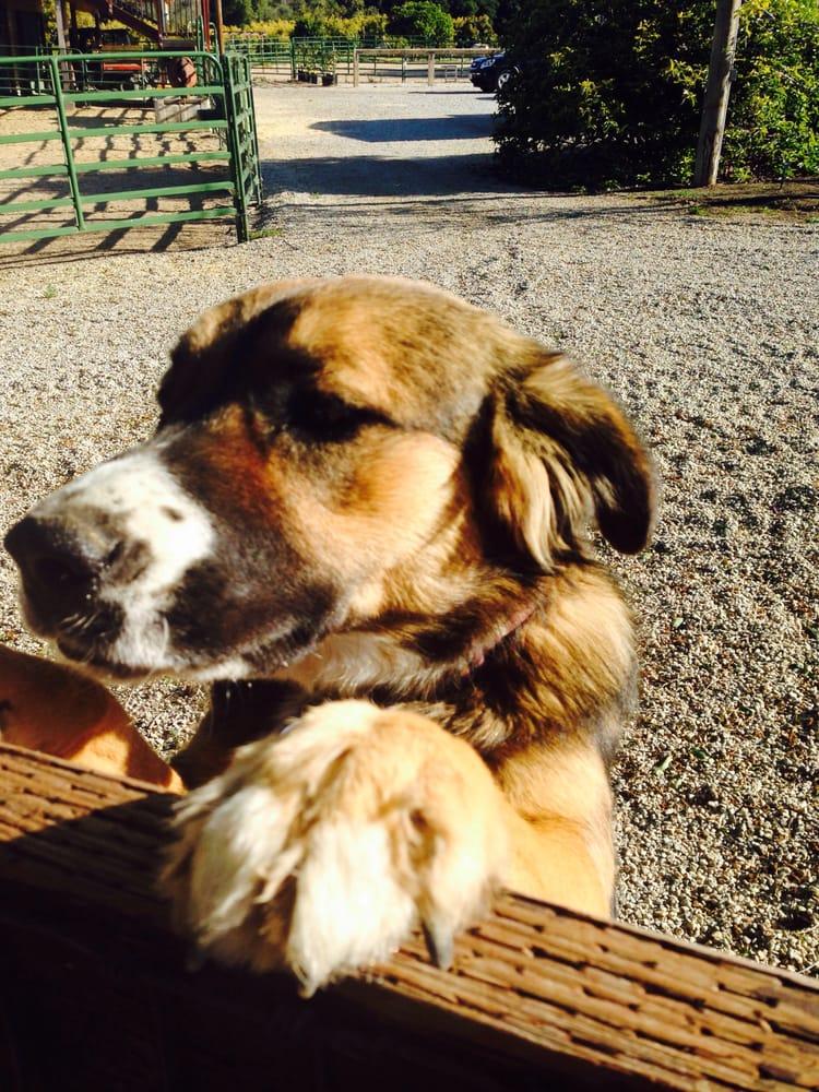 Estero Bay Pet Care