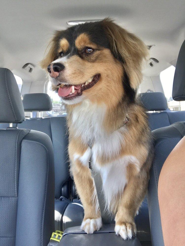 Coature Pet Spa: 1411 Mangrove Ave, Chico, CA