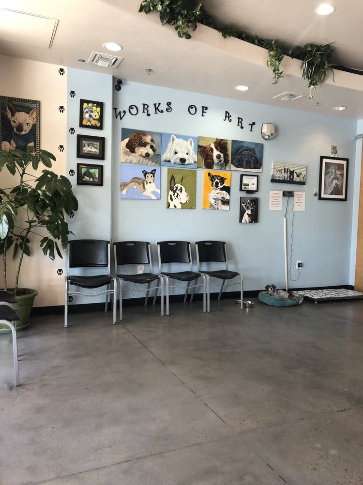 Katz & Dogs Wellness Clinic