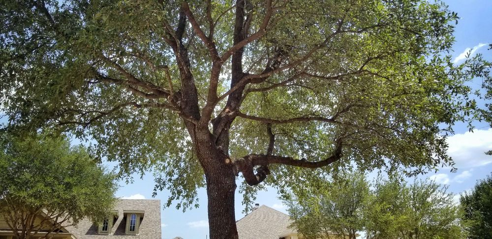 Tree Service Solutions: 2606 County Rd 1106, Anna, TX