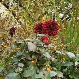 Photos For Loki Schmidt Garten Yelp