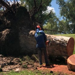 Photo Of Arbor Care Tree Service Tempe Az United States