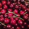 Phelps Fruit & Berry Farm: 8722 S 6200th W, Payson, UT