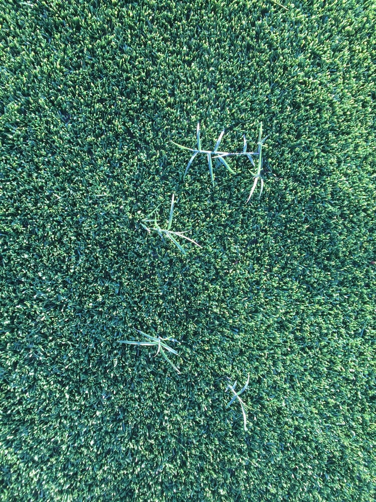 Hunny Do Artificial Grass 10 Reviews Artificial Turf