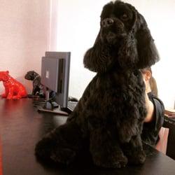 au salon du chien demander un devis toilettage 13 rue paul janet grenoble num ro de. Black Bedroom Furniture Sets. Home Design Ideas