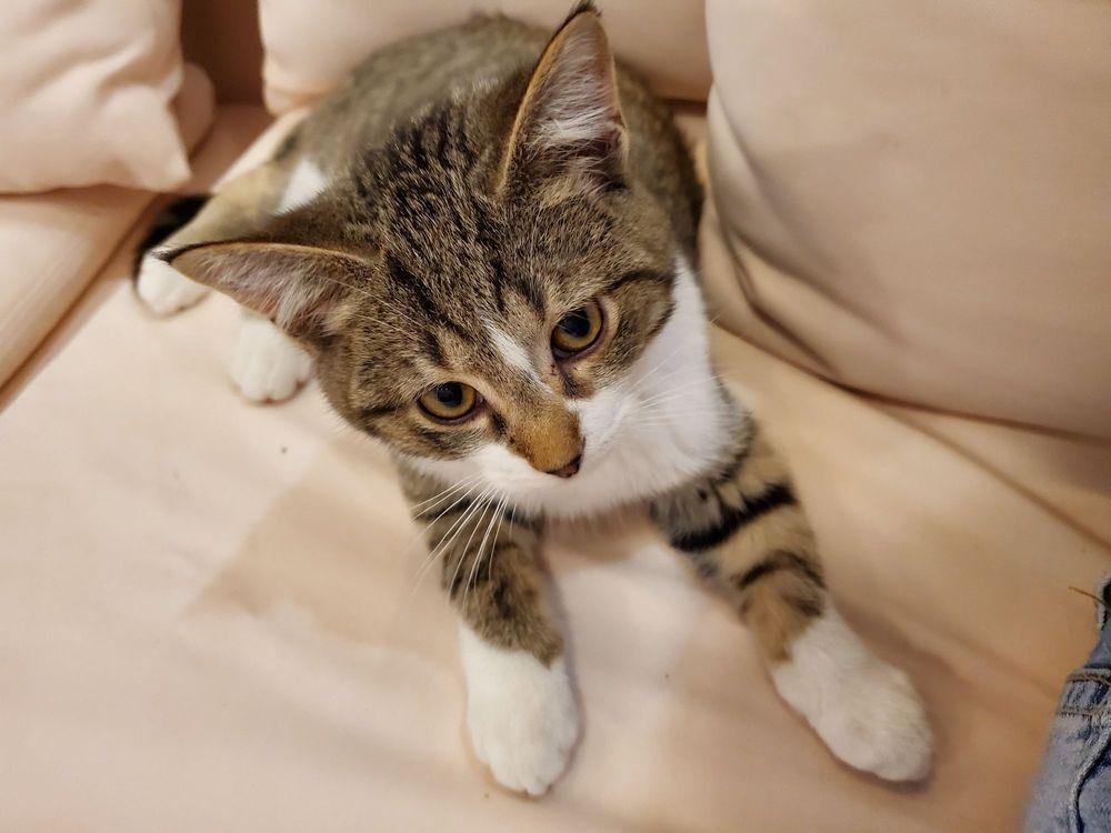 Lazy Cat Lounge: 846 Main St, Lafayette, IN