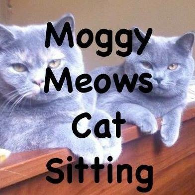 Moggy Meows Cat Sitting: Brighton, BNH